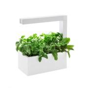 TREGREN Oy Ab Tregren - Herbie Indoor Garden, weiß