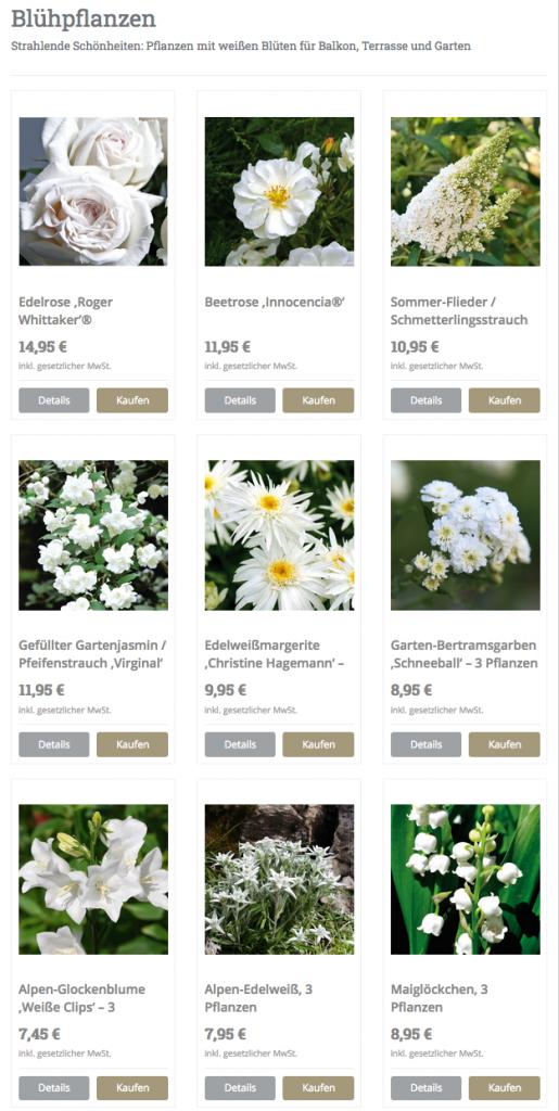 Eine Auswahl der schönsten weißen Blumen und Blüten für Garten, Balkon, Terrasse